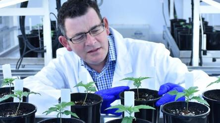 Premier Andrews confused cannabis with cannabidiol.